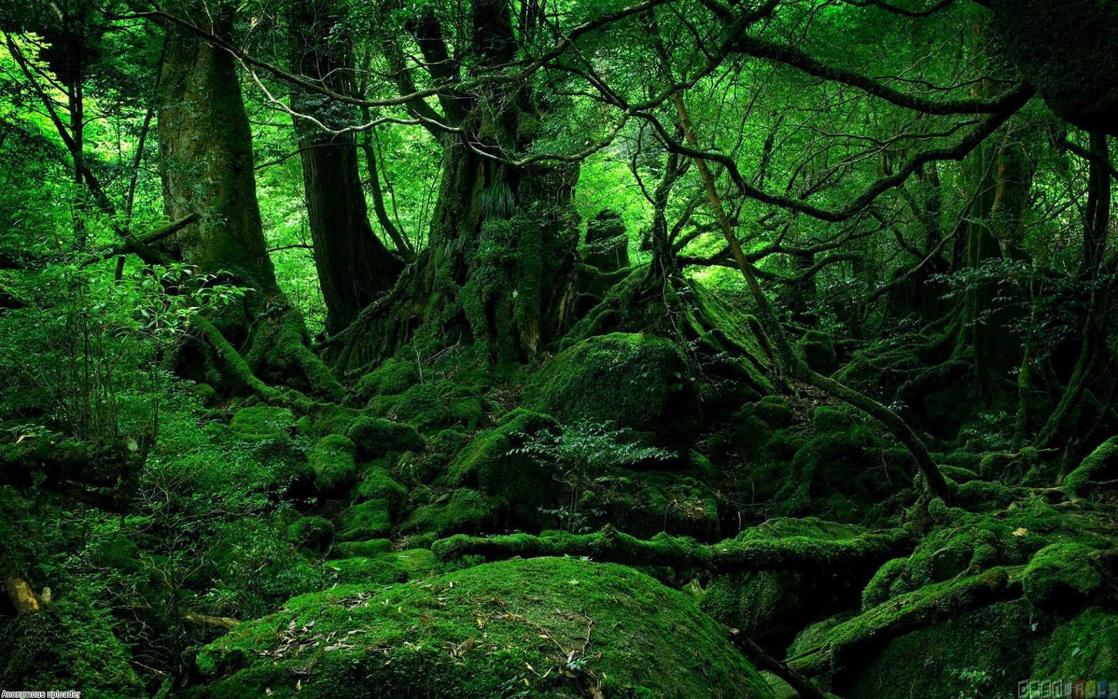 1000 Images About Moss On Pinterest Carpets Green