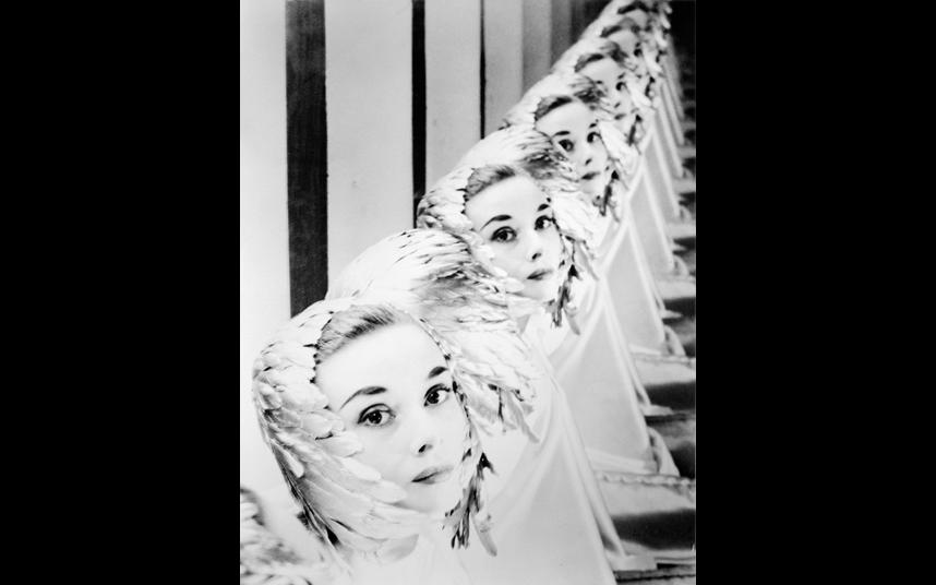 Fotografía.Portrait of an Icon. Audrey Hepburn