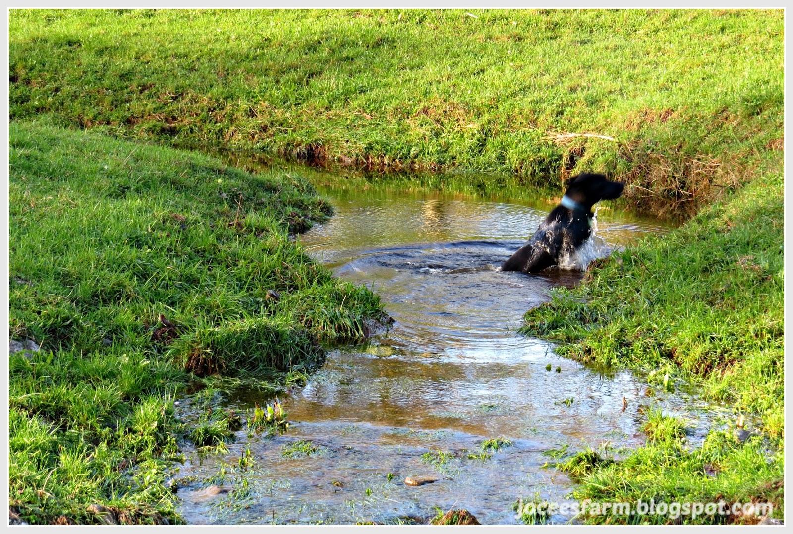 Autumn Rain | joceesfarm.blogspot.com