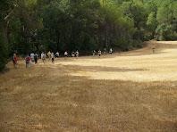 Creuant un gran camp de cereals després de l'aqüeducte