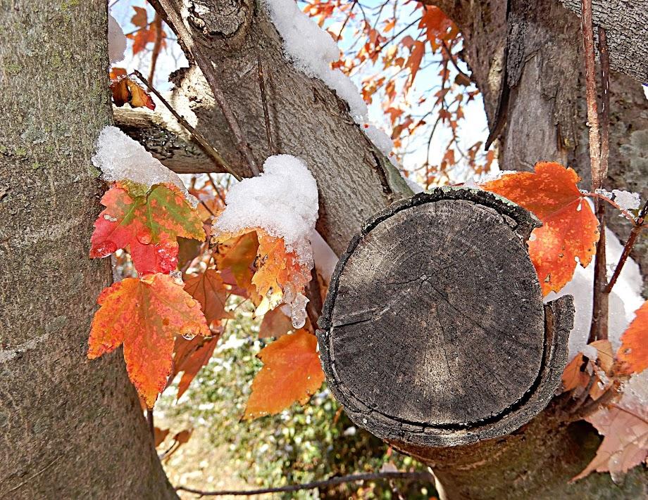 Fall on Ice