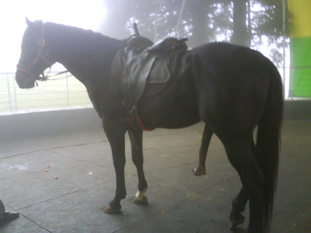 horse ejaculation