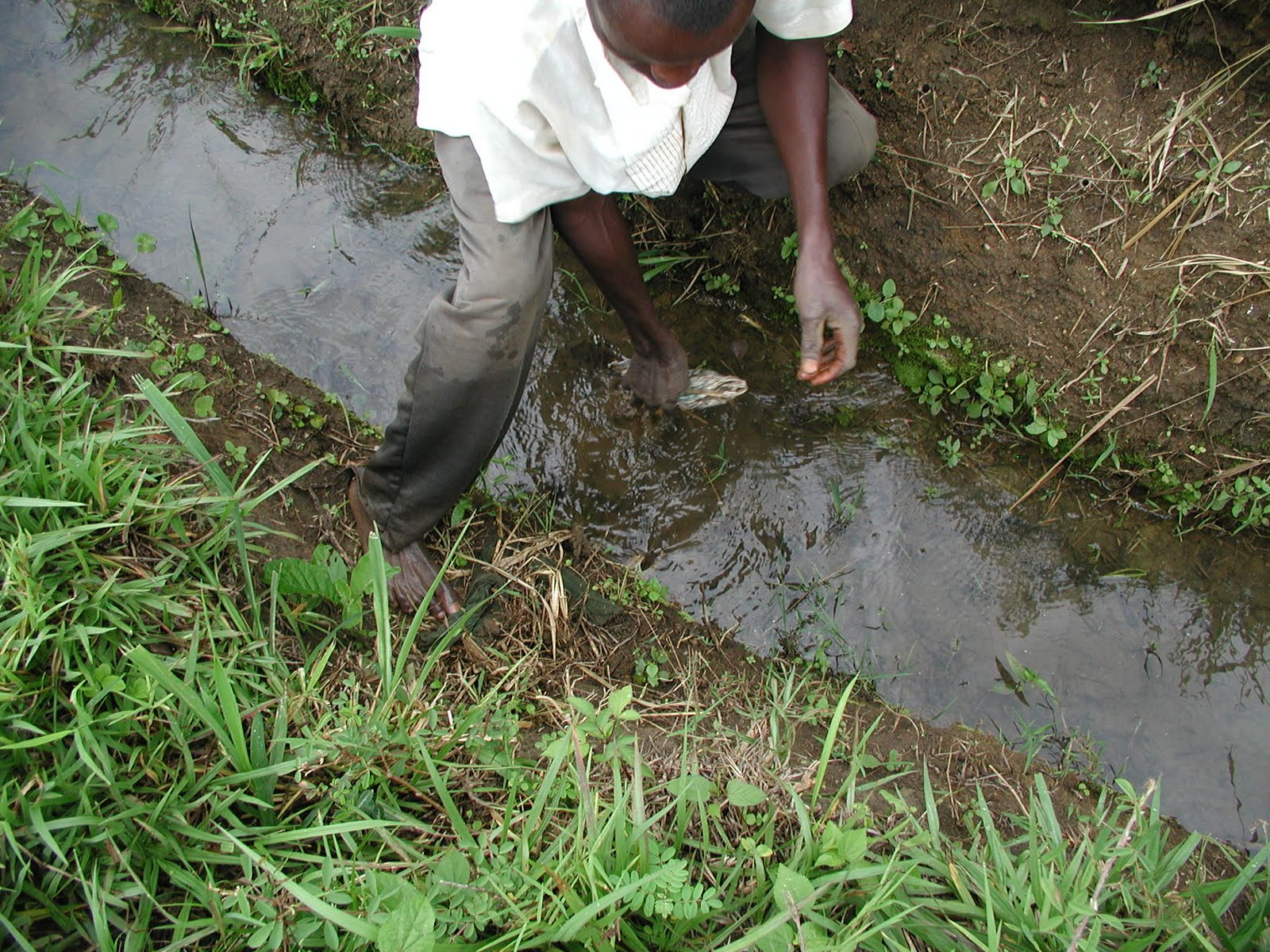 Dave 39 s east africa blog day 13 busia may 21 2011 for Filling in a pond