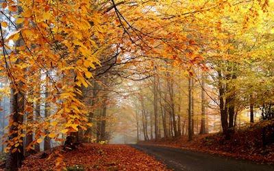 Recuerdos del Otoño (Postales del Bosque) Autumn