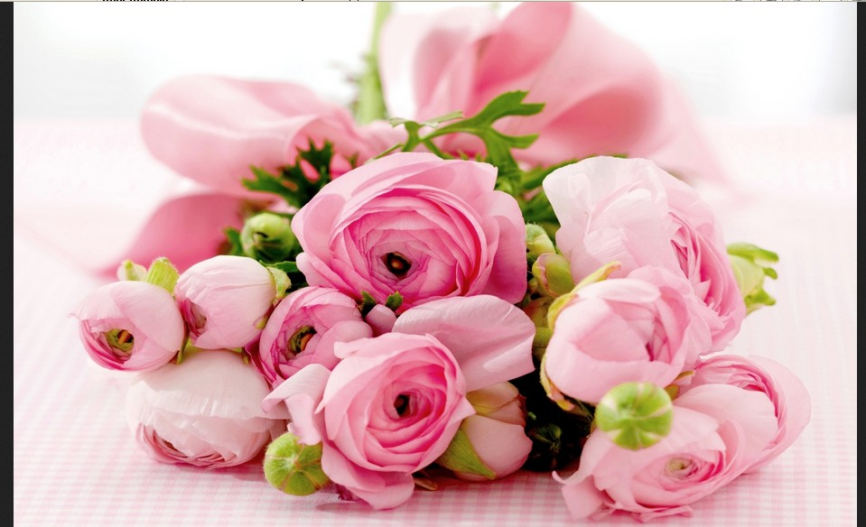 After They Were First Cultivated In The 18th Century For Business Use Most Of Them Existed Colours Pink