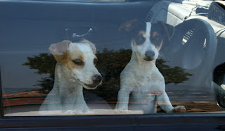 Puppies left in the car