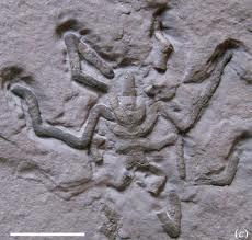 Fósil de araña  prehistórica