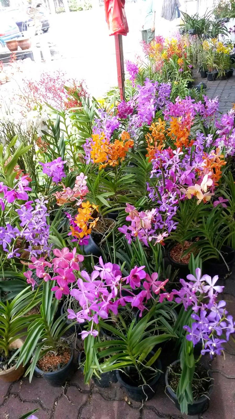 Pesta orkid,pesta orkid di perlis ,bunga orkid ,warna bunga orkid,cara penjagaan pokok orkid,penjagaan bunga orkid ,baja bunga orkid,cara penjagaan pokok orkid , bunga orkid kembang