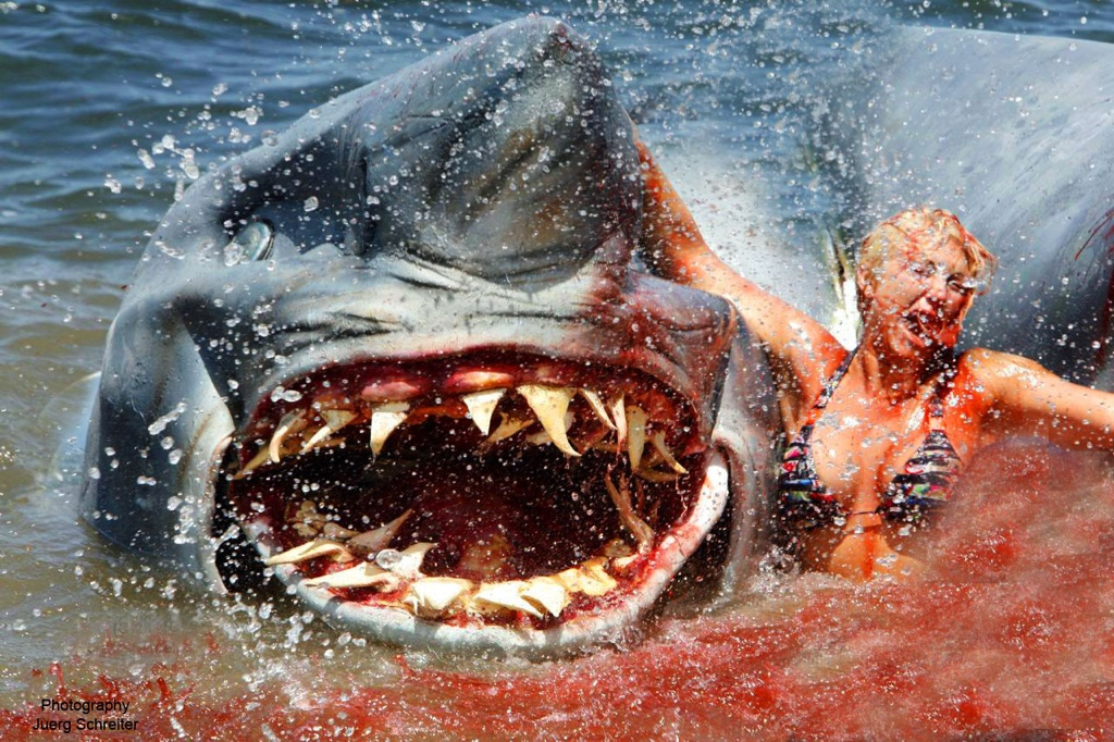 Sharks eating people latest pictures images 2013 top hd animals