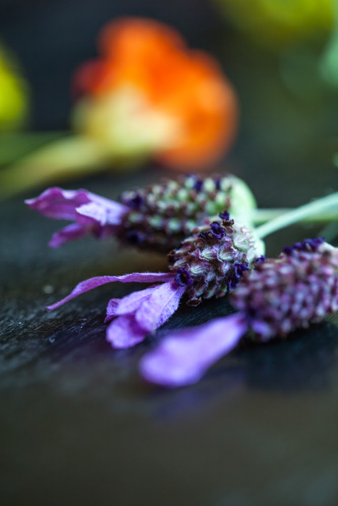 Crackers on the Couch: Edible Flowers, Spanish Lavender Blossoms