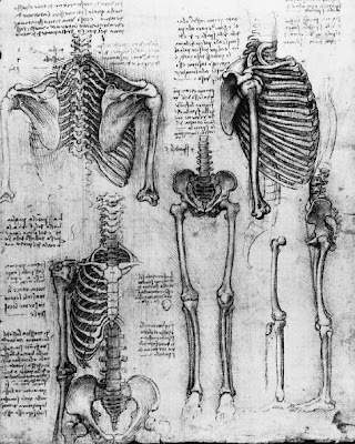 estudos de Leonardo da Vinci
