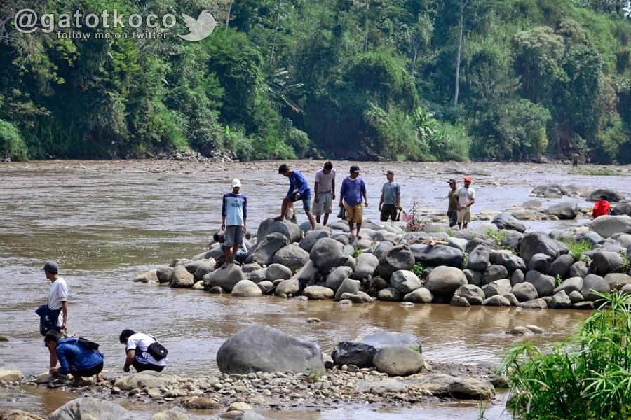 Berburu ikan sekarat di sungai Serayu