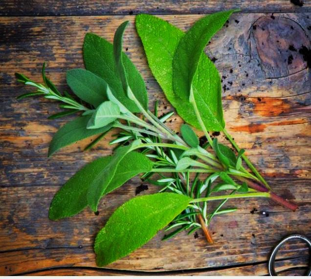 Dried vs fresh herbs