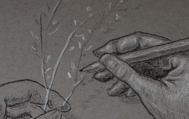 drawing, hands, sketch, study, art, sarah, myers, fingers, manos, charcoal, conte, grayscale, gray, grey, white, black, leaves, arte, dibujo, holding, pencil, detail, close-up, realistic, figurative, classic