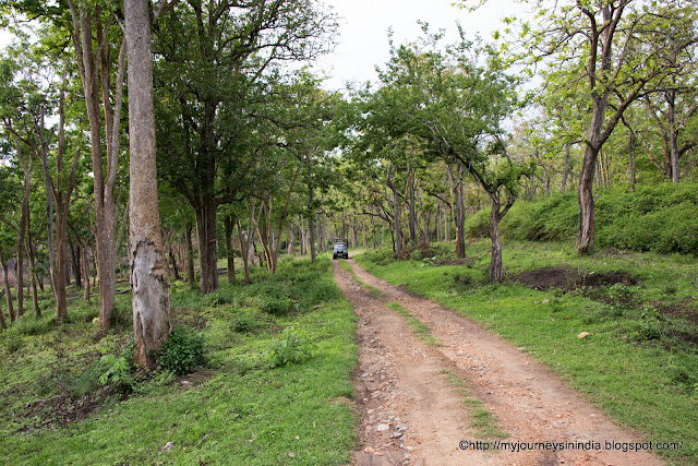 Safari route Inside the Bandipur Forests