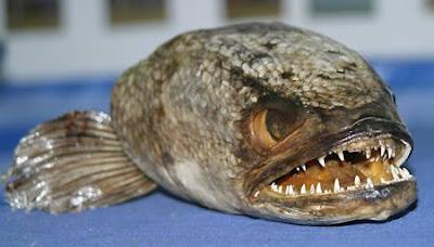 [Image: Snakefish.jpg]