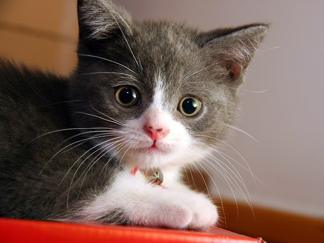 A Really Cute Kitty