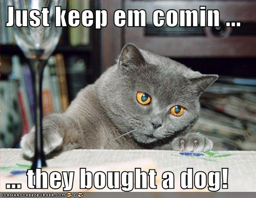 Funny Image Gallery: Most Captions Funny Dog Pictures ...