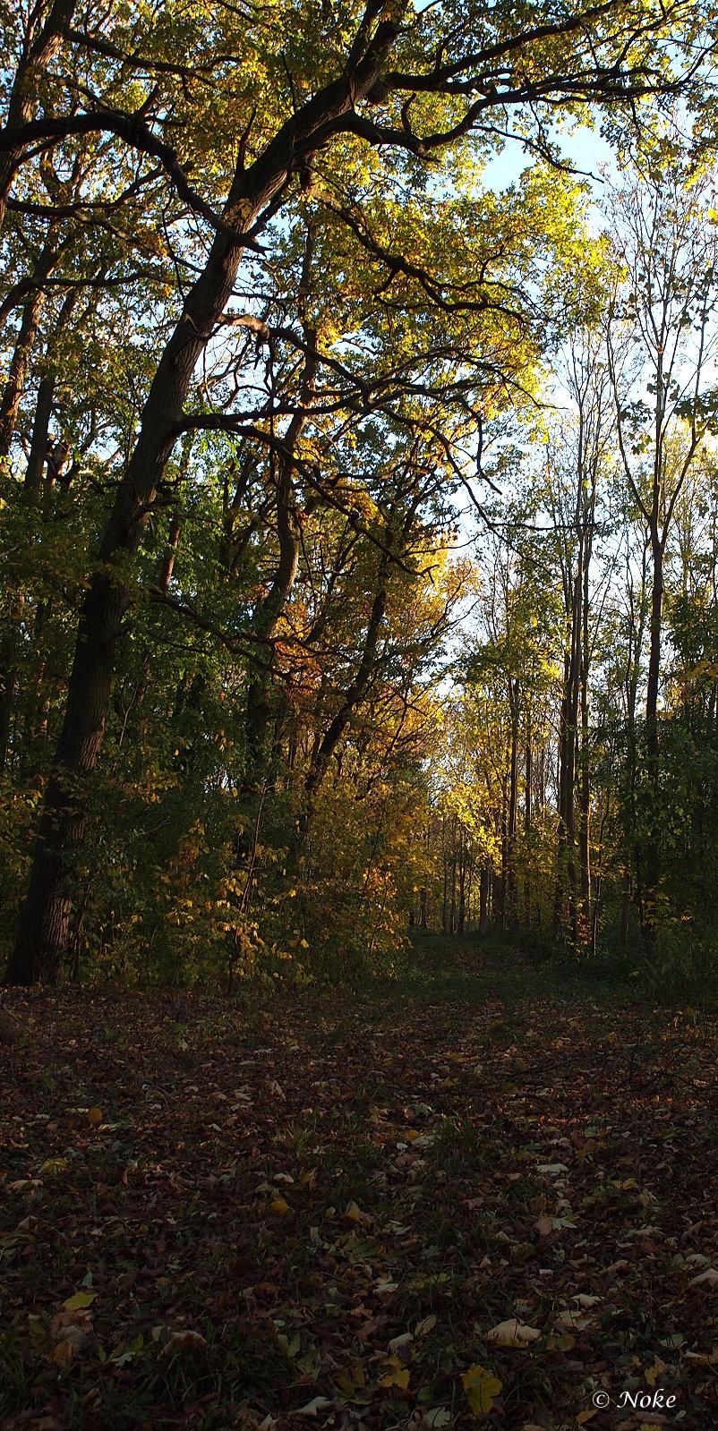 Waldweg im Herbst_2018