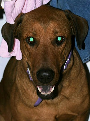 dog with green eye