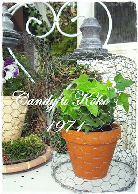 Candy u Koko 1971 - 21.04.