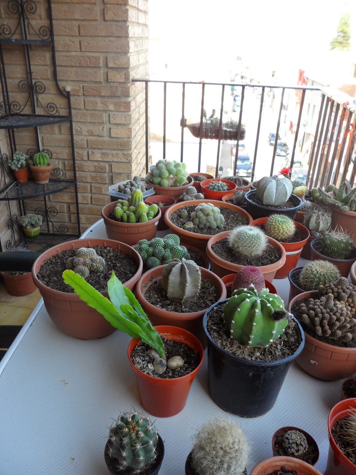 Pasi n por las plantas mi terraza de crasas - Plantas terraza ...