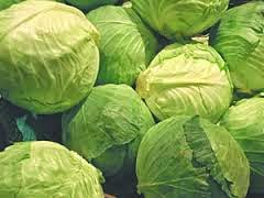 indian cabbage