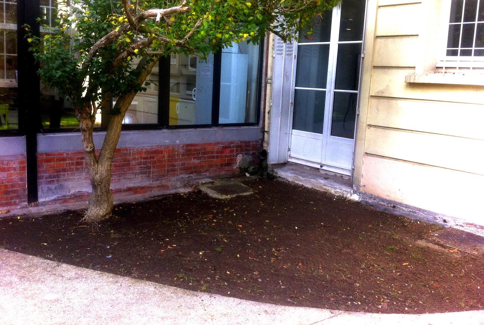 edouard jardinier paris engazonnement surface paris. Black Bedroom Furniture Sets. Home Design Ideas