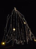 ハリモミのイルミネーションもまさに本物のクリスマスツリー?