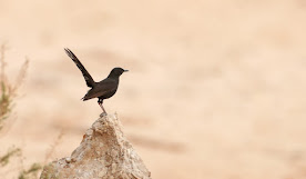 Birding in Israel