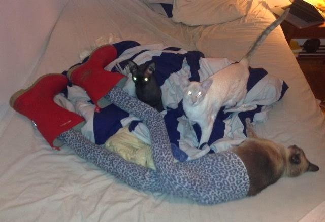 коты с чулками