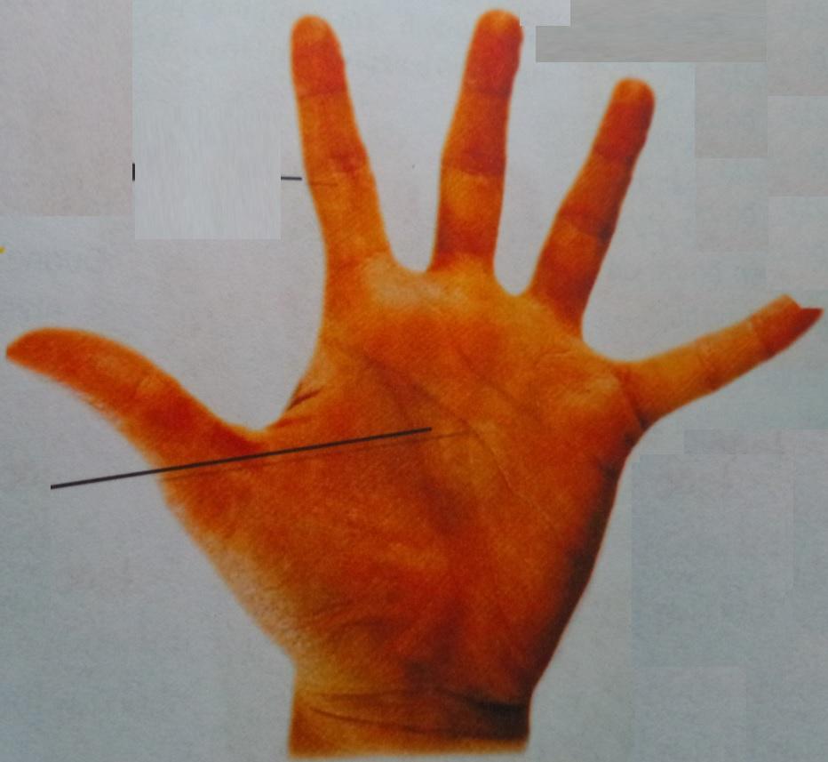 Bàn tay hình Phong & xem tướng số của bàn tay này!