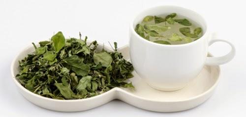 Trà chùm ngây (Moringa Tea)
