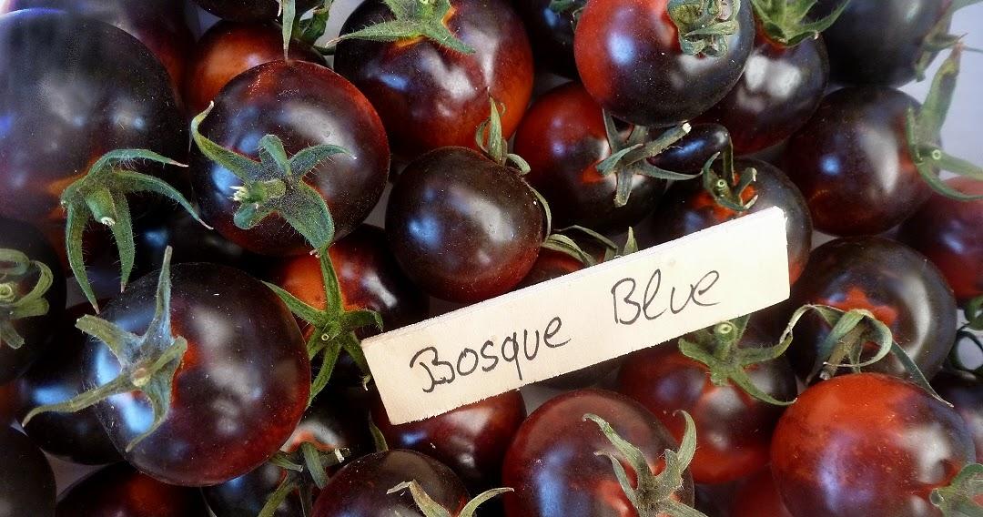 kleiner gem sek nig blaue tomaten klassiker bosque blue. Black Bedroom Furniture Sets. Home Design Ideas