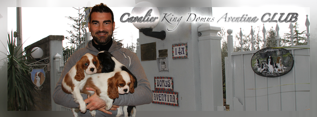 Cavalier King Domus Aventina CLUB