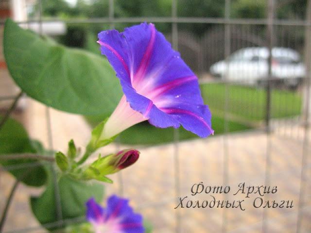 Фиолетовый цвет 5