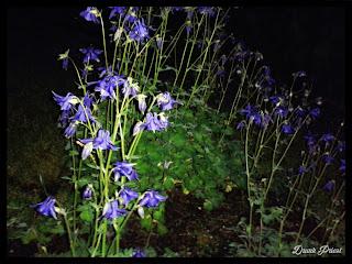Ogród Botaniczny nocą
