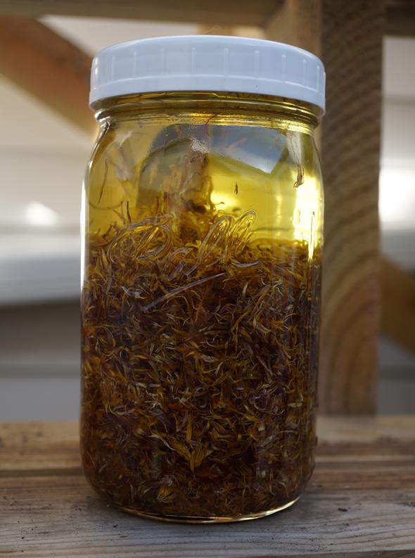 calendula infused oil salve