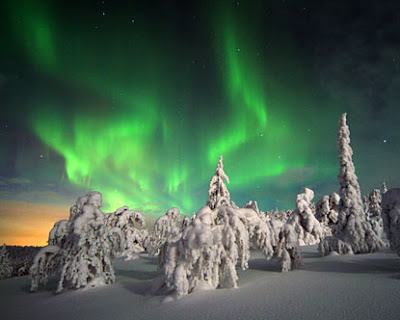 Snow Finland Aurora Borealis Trees Snow-covered