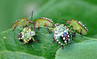 Insects HD 21