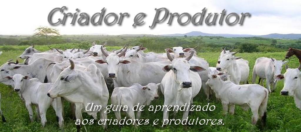 Criador e Produtor