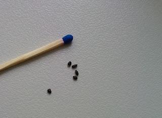 bazylia czerwonolistna - nasionka