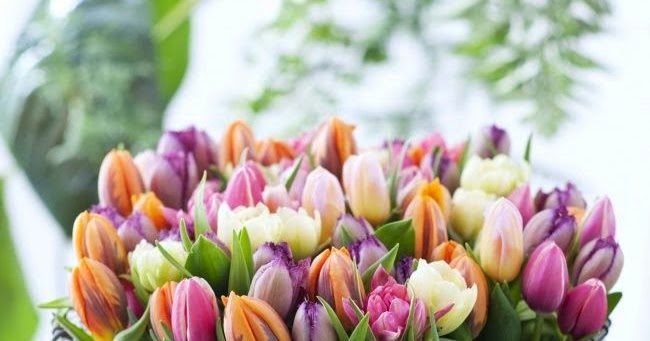 Most Beautiful Spring Flowers Collection Explore Amazing