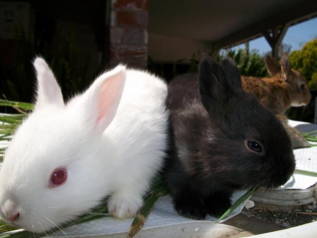domesticated pet rabbits Browse the rabbits category on pet-classifiedscom, where pets find new homes.