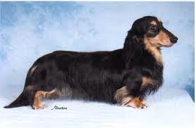 SG Dachshunds.: Types of Dachshund.