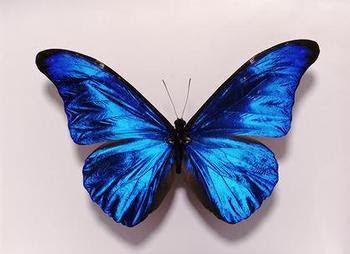 letra de cancion mariposa traicionera de mana: