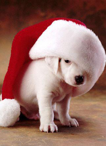 Funny christmas dog pictures, Funny christmas cat pictures, Funny ...