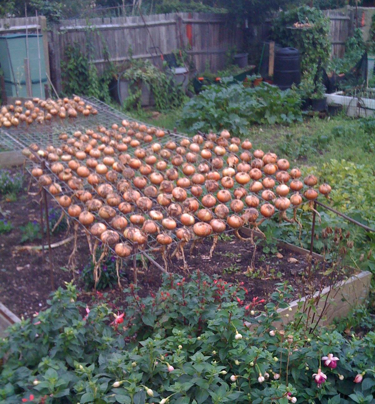 Garden allotment designs garden ftempo for Garden design hacks
