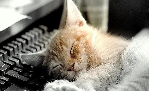 Koty Kotki Kociaki O Czym Miauczy Do Nas Kot Czyli