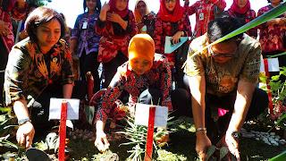 Masyarakat Diharap Manfaatkan Pekarangan Untuk Taman Herbal